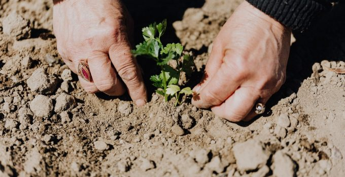 Prendre soin de l environnement et de son alimentation a la fois